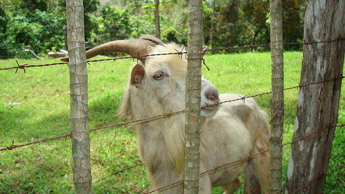 goats-just-eat