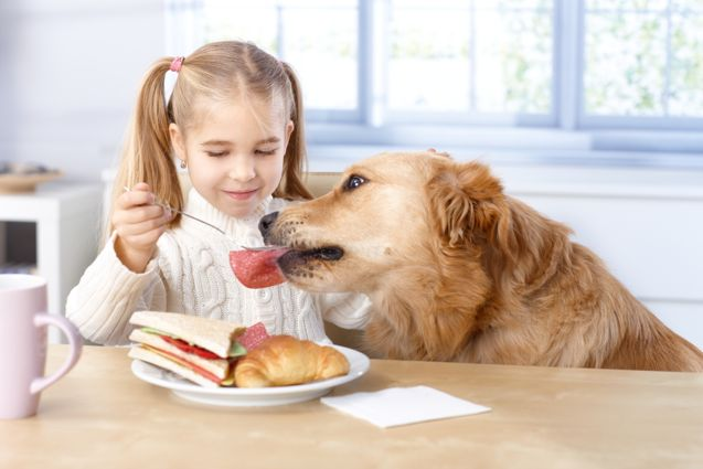 Foods Safe for Dogs
