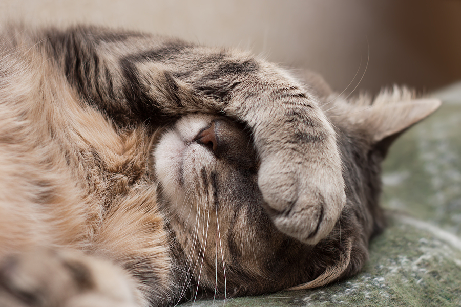 http://renegadehealth.com/blog/wp-content/uploads/2015/01/bigstock-Sleeping-Cat-56250410.jpg