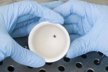 get tested for lyme disease, test ticks for lyme disease
